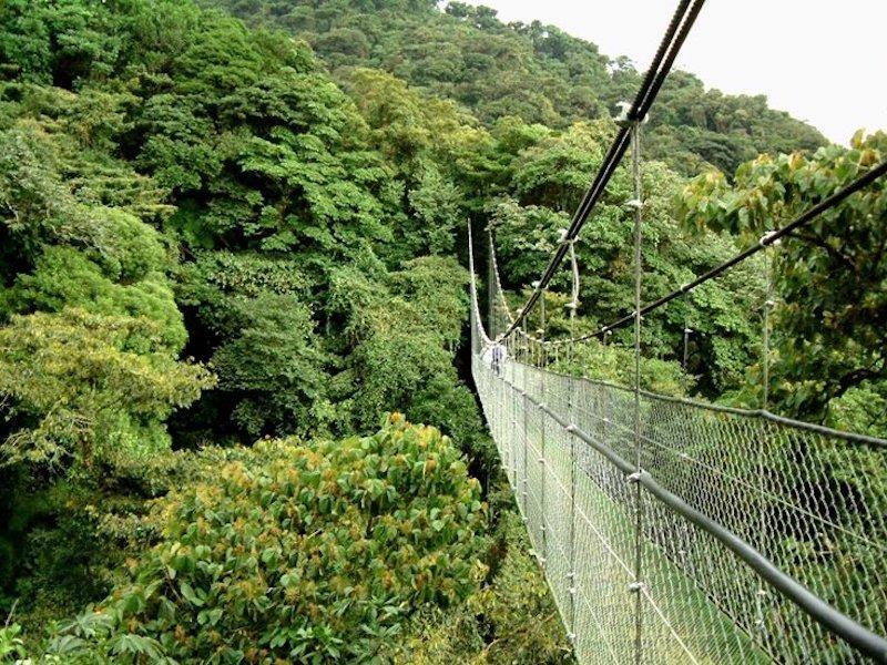Monteverde Hängebrücke in Costa Rica