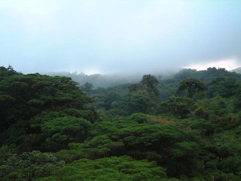 Monteverde Nebelwald in Costa Rica