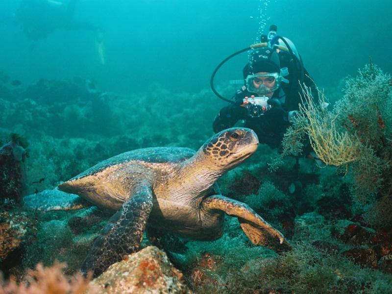 Taucher mit Schildkröte in Ecuador